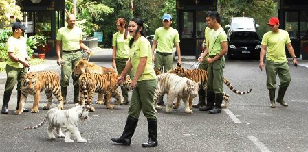 Taman Safari Indonesia II